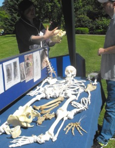 Teaching skelton display