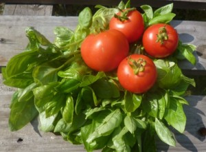 Fruitful harvest of tomatoes and basil